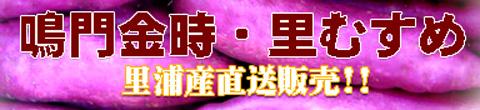 """鳴門市里浦町産の""""なると金時【里むすめ】""""は厳しい選別を経たブランドいもです。"""